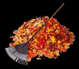 rake_leaves